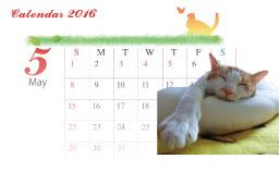 五月病のだらけ猫