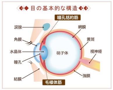 目の基本的な構造