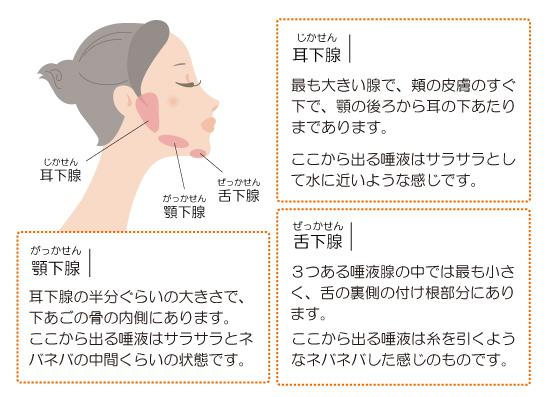 3つの唾液腺=耳下腺・顎下腺・舌下腺