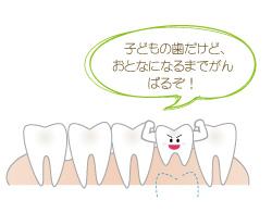 大人になるまで残存する乳歯