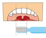 歯ブラシヘッドのサイズ