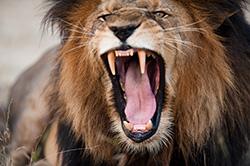 動物の歯(陸上の哺乳類編)